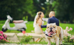 Сватбен фотограф, сватбена фотография, ива грозева, сватба, сватбени, svatba, svatben fotograf, фотосесия, професионален фотограф, www.ivagrozeva.com (36)